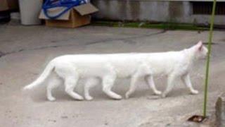 猫や子猫のかわいい、おもしろ、ハプニング映像や動画をお届けします。...