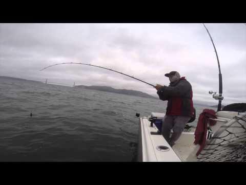 Halibut Fishing SF Bay