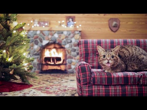 Lil BUB's Very MOST Magical Yule Log Video