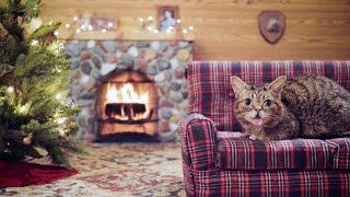 Repeat youtube video Lil BUB's Very MOST Magical Yule Log Video
