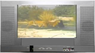 Дикая природа. Бенгальские тигр против черного медведя. Bengal tiger against a black bear(Дикая природа. Бенгальские тигр против черного медведя. Bengal tiger against a black bear Смешные кошки. cool and funny cats Эти..., 2014-06-02T03:06:17.000Z)