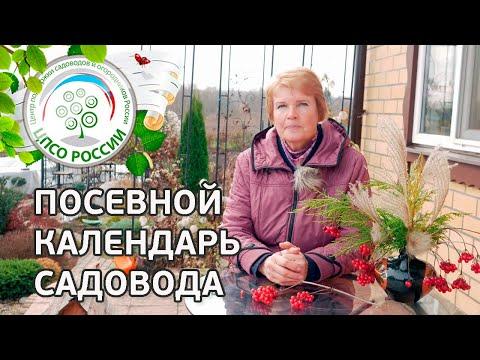 Посевной календарь садовода. Как составить календарь огородника. | выращивание | вырастить | открытый | теплица | посадка | агроном | семена | сажать | россии | огород