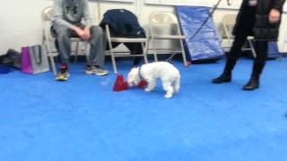 Play And Games For Small Dogs At Your Dogs Friend