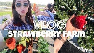 VLOG | 跟我去采超大草莓!