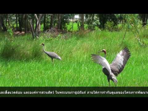 แถลงข่าวโครงการอนุรักษ์ถิ่นที่อยู่อาศัยนกกระเรียนพันธุ์ไทย
