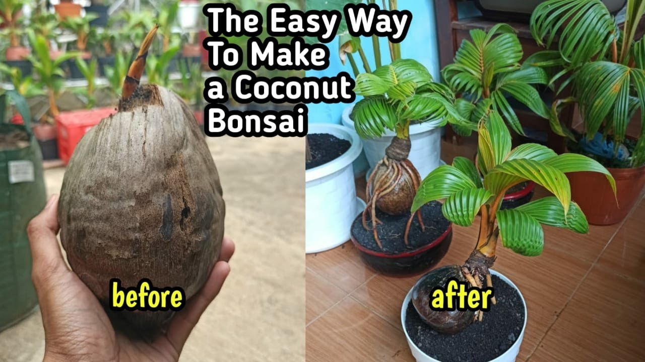 Download THE EASY WAY TO MAKE A COCONUT BONSAI