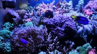 Обслуживание аквариума(http://akvariumsee.com/obsluzhivanie-akvariuma В процессе жизнедеятельности рыб, беспозвоночных в аквариуме меняется состав..., 2014-03-10T00:27:27.000Z)