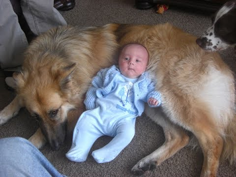 German Shepherd Dogs and Babies Best Friends – Cute Friendship Dog and Baby