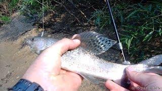 рыбалка на таежной реке/хариус/ленок/(июль 2018)