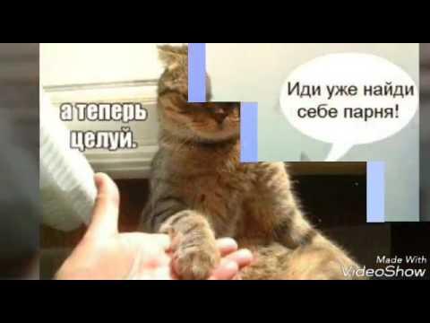 Котики-картинки (мы все их любим)🐱❤