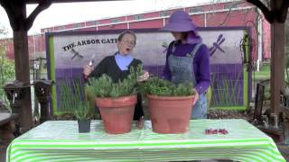 How to Prune Rosemary