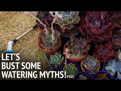 #105 Watering Succulents Based On SCIENCE, And Busting Some MYTHS!