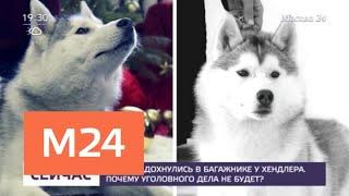 Хаски задохнулись в багажнике у хендлера - Москва 24