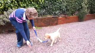 Puppy Training In Church Stretton