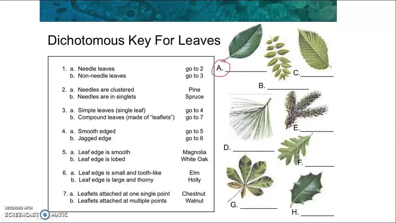 Classification Dichotomous Keys (examples, answers ...