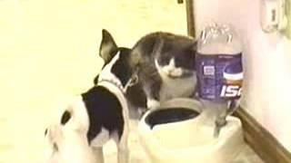 Смешные ролики про кошек.
