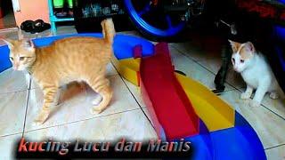 Kucing lucu main mobil - mobilan bikin ngakak