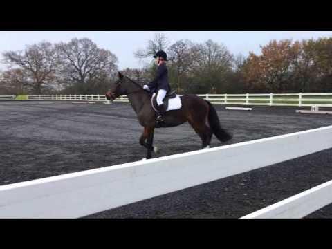 Woodside Wonders Dressage - Norton Heath 30.11.14