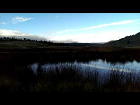 Mysterious Howls in Yellowstone