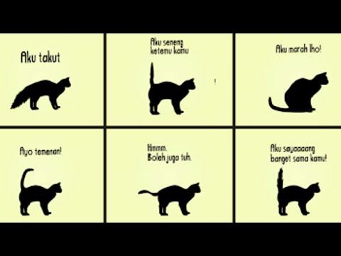 Unduh 99+  Gambar Ekor Kucing Terbaru