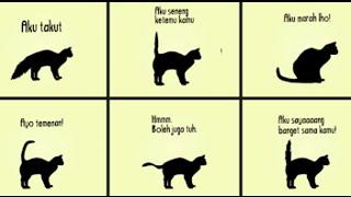 Inilah Arti Gerak Ekor Kucing Anda