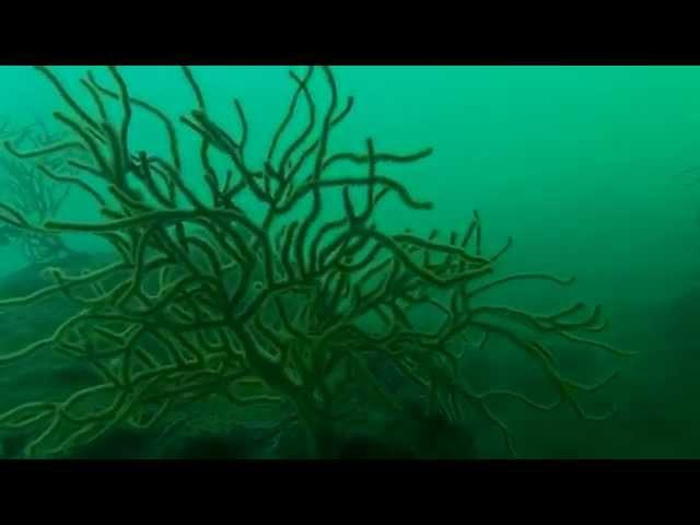 Sea Fans 01/09/15