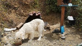 Best dog rescue I ever performed ! The day I stole Greek Hachiko !