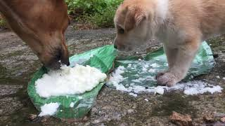 Feeding to Street mother dog and her cute puppy  Dogoftheday
