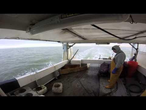shooting whelk gear back on hot shot