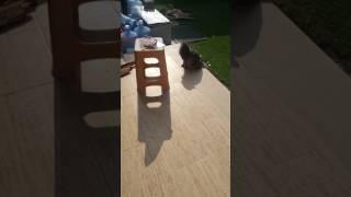Kedi yumak