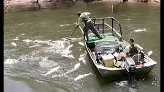 Electrofishing Fish Shocking Explained