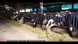 Bilinçli Hayvancılık - Büyükbaş Besi Çiftliği Maliyeti Nasıl Düşürülür?