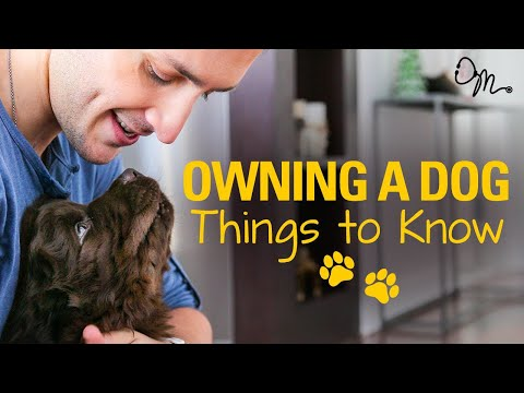 OWNING A DOG | Things to Know Before Getting a Puppy! | Doctor Mike