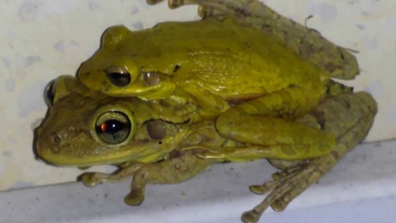 how to get rid of tree frogs in florida