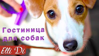 ОДИН ДЕНЬ ЩЕНКА  | ГОСТИНИЦА ДЛЯ СОБАК | Elli Di Собаки