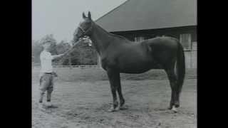 20世紀のアメリカ名馬100選 - Bl...