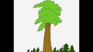 Giant Sequoia tree How to draw a easy? Как нарисовать просто? Секвойя