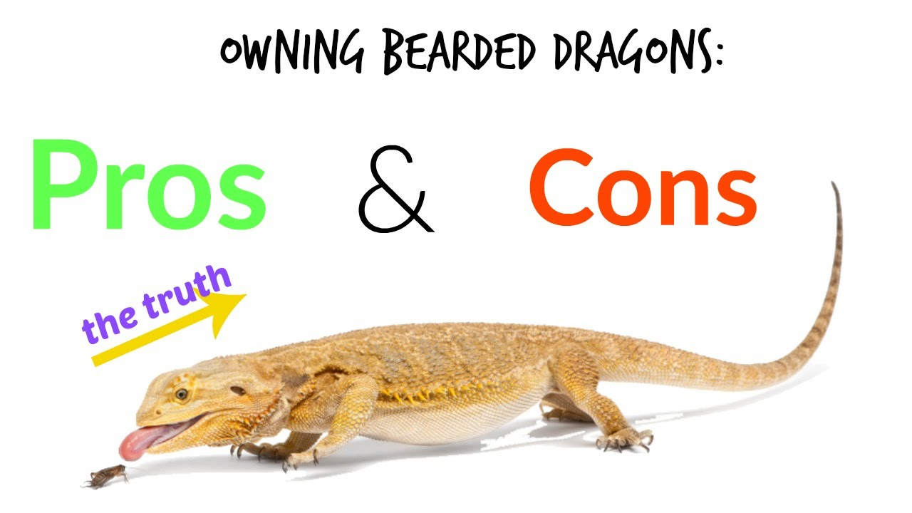 Owning bearded dragons pros cons the truth youtube for Pex pros and cons