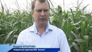 видео Орошение сельскохозяйственных культур