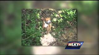 Advocates Against Dog Fighting Push For Stricter Laws In Kentucky