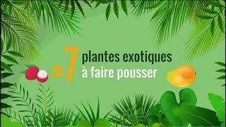 🌴 7 fruits exotiques mangés = 7 plantes tropicales à faire pousser 🍍