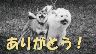 チャンネル登録者1000達成☆有難うございました!今後も精いっぱい心をこ...