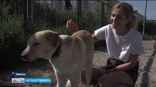 Жители Тюменской области стали реже «обижать» животных