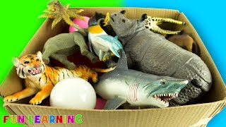 Wild Animals Box of Toys with Colors For Kids To Learn and Animal Names