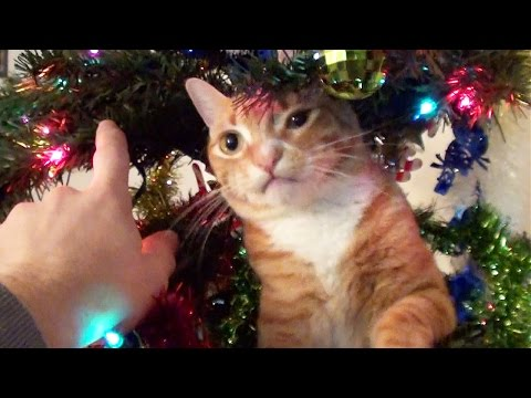 Trying to Decorate a Christmas tree with cats around!