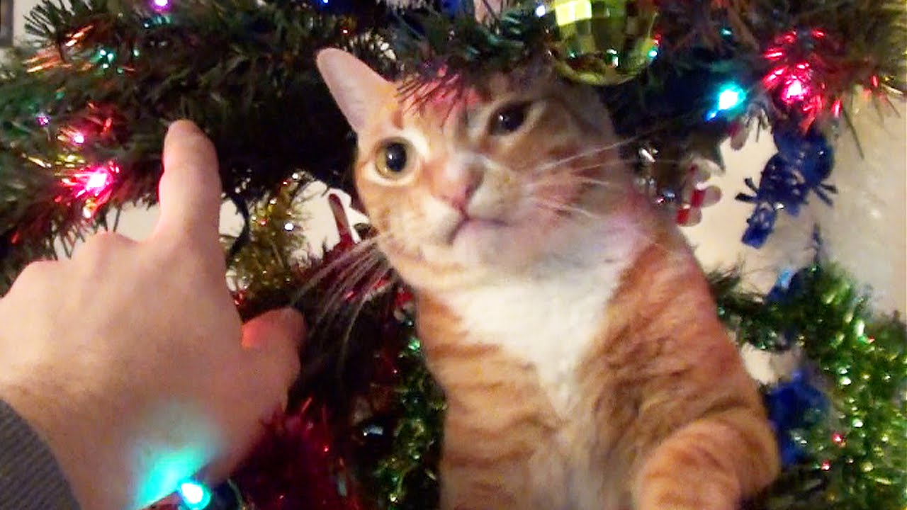 Trying To Decorate A Christmas Tree With Cats Around