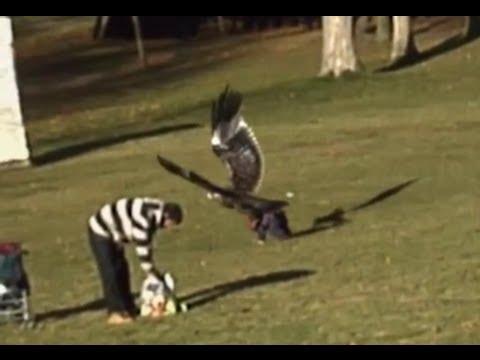 Eagle Picks Up A Baby