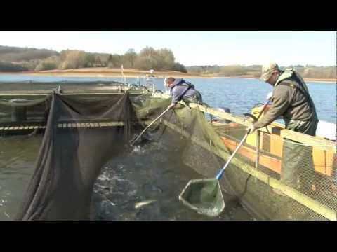 Trout Fishing: Restocking Reservoirs With Rainbows