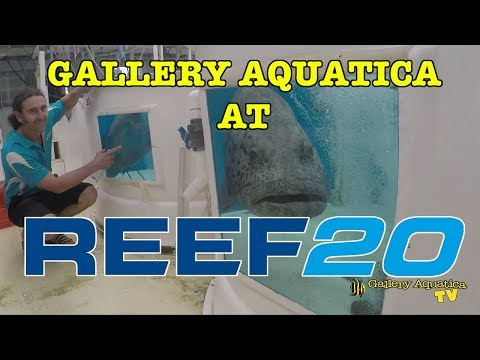 Cairns Marine REEF20 Invitational Event --- Gallery Aquatica TV