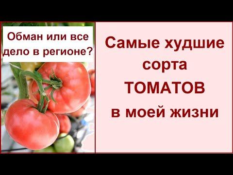 Больше эти помидоры никогда не посажу.